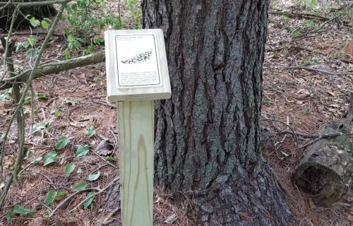 Tree ID Marker